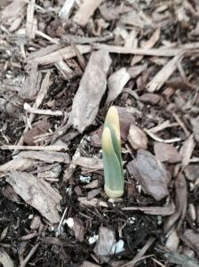 Plant - 3