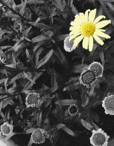 Flowers_edit copy 3